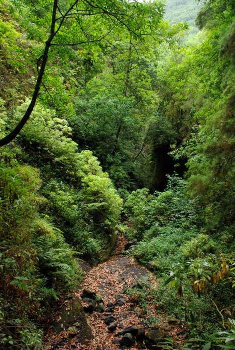 The river bed at Los Tilos, San Andres y Sauces, La Palma