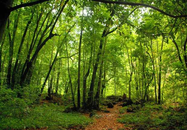 Laurel forest at Los Tilos, San Andres y Sauces, La Palma